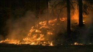 Rim Fire pustoszy Kalifornię. Ogień zajął już tysiące hektarów