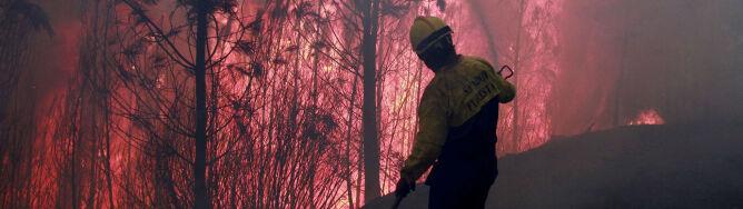Portugalia w ogniu. Pożary lasów zagrażają okolicznym wioskom
