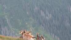 Zwierzęta napotkane w Tatrach (Kontakt24/Agnieszka i Grzegorz)