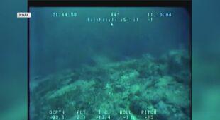 Nietypowe ryby olbrzymy - Sunfish