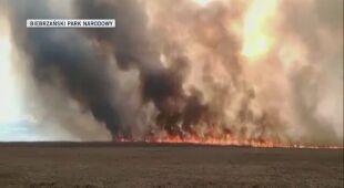 Płomienie od strony lasu wroceńskiego w kierunku rzeki Ełk materiał z dnia 21 kwietnia 2020 (Biebrzański Park Narodowy)